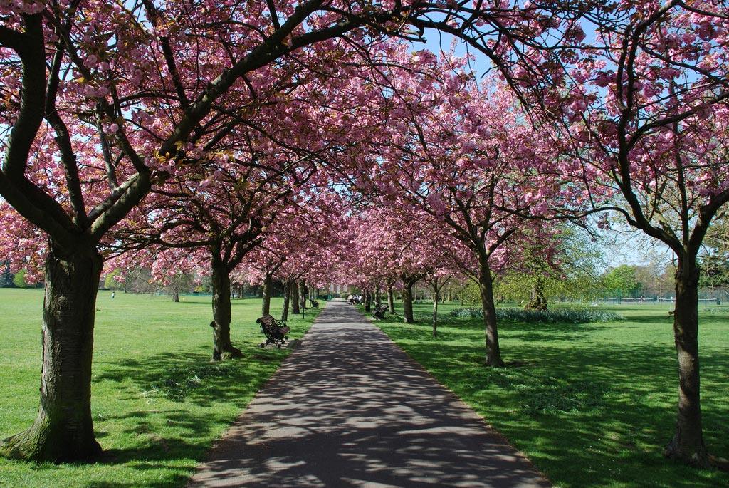 Greenwich Park. London. England