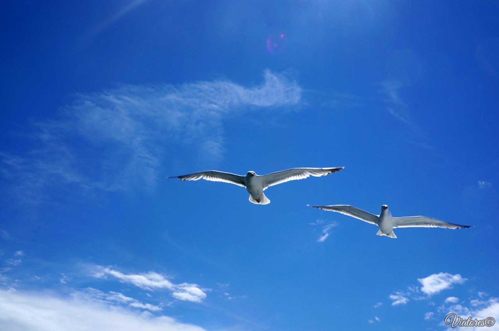 Чайки. Чивыркуйский залив