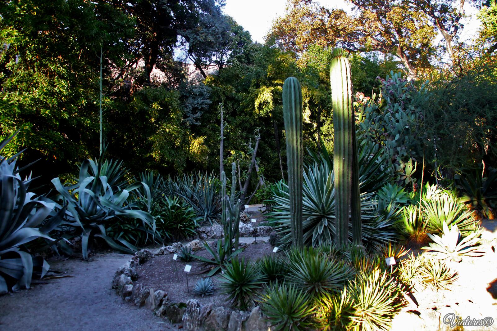 Jardi Botànic. Valencia. Spain