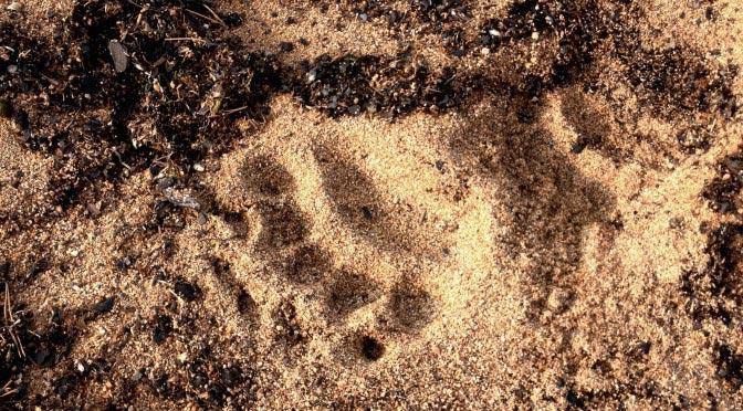 Как я встретила медведя на Байкале