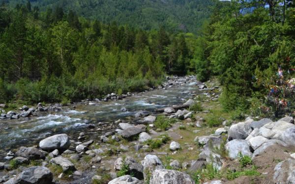 Kyngyrga. Ashan. Buryatia.